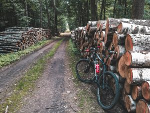 Bike in the forest where felled trees