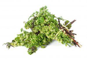neem to kill bacteria and viruses
