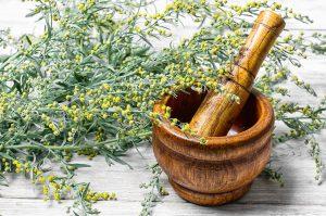 sweet wormwood kills viruses bacteria