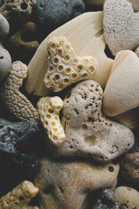 Coral water is the secret of longevity