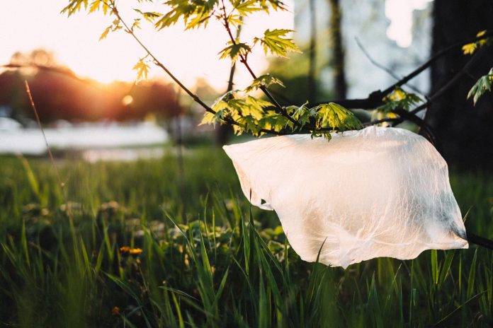 Plastic bag on the branch of tree or bush
