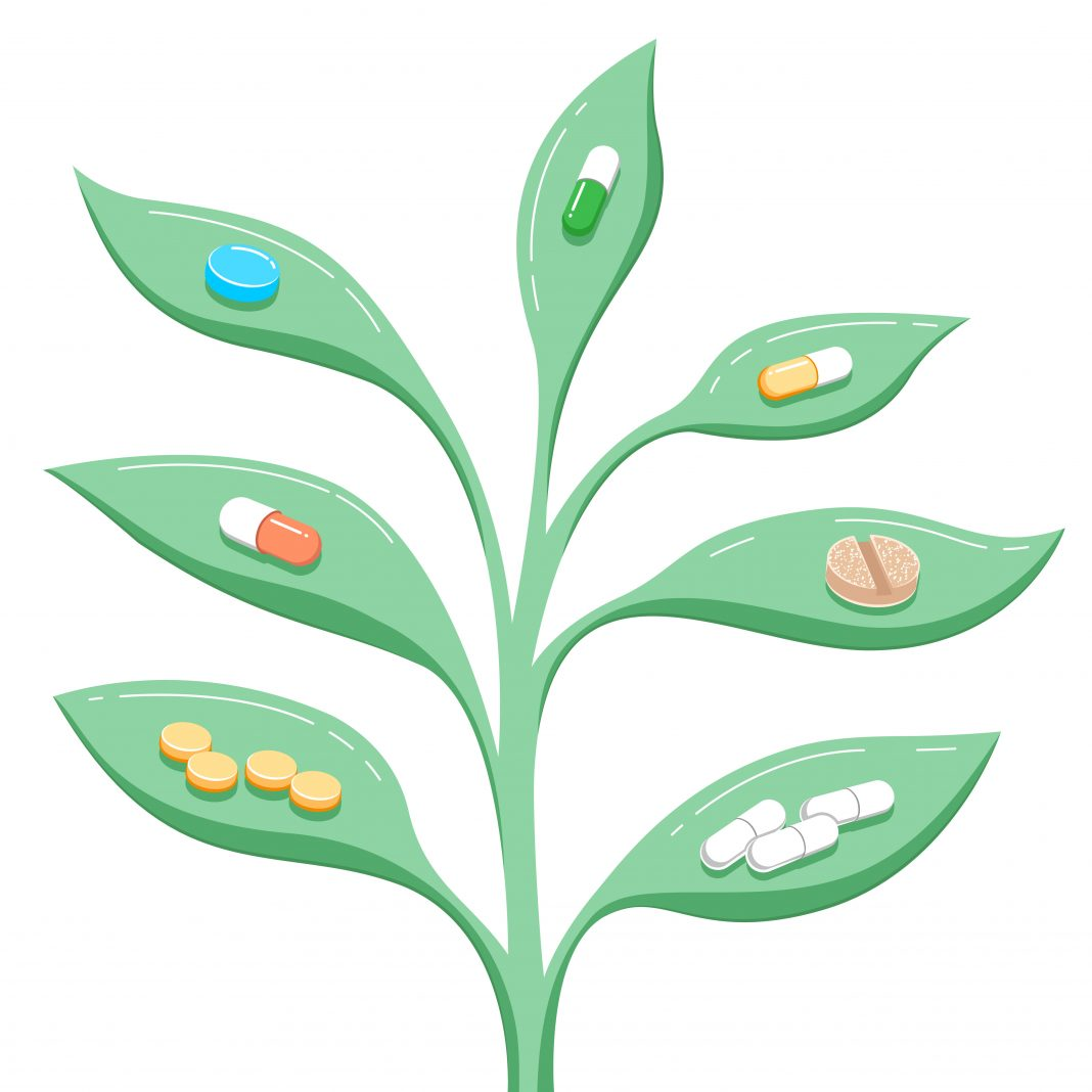 Plants and herbs that kill bacteria in our organism natural remedies microbes viruses