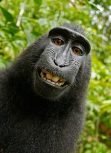 Smiling face of monkey