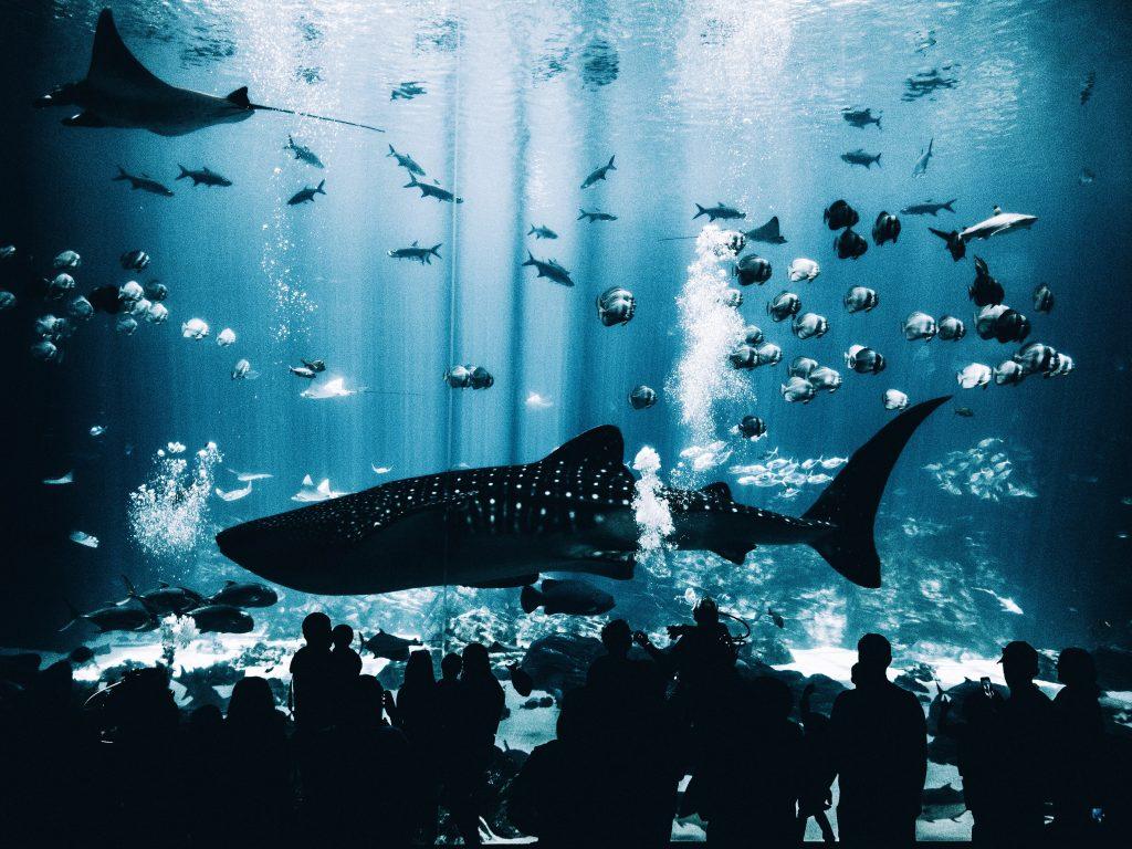 Shark, other fishes in a big aquarium