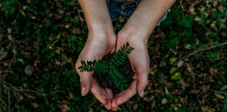 Green plant in female hands
