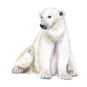 polar bears extinction how to protect endangered polar bears