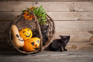 Adopt the cat on Halloween make a difference this Halloween