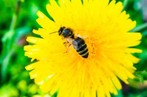 Quality of honey depends on plants. Honey depends on the environment.
