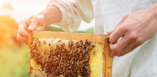 beneficial properties of honey, bee breeding properties, benefits of honey