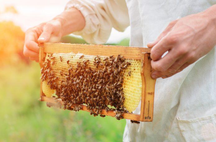 beneficial properties of honey, bee breeding properties, benefits of honey