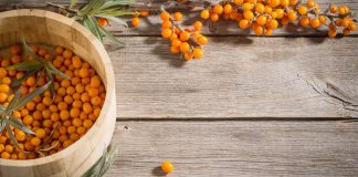 backthorn ia a source of natural elements useful for health, bucktorn tea, bucktorn dieat, buckthorn elements to speed up metabolizm, buckthorn oil,